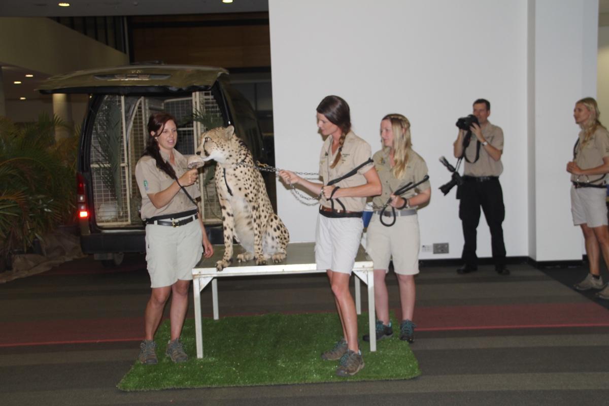 Minnik Chartered Accountants - Australia Zoo - An Unexpected Guest