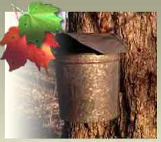 bronze maple bucket attached to maple tree with foliage leaves