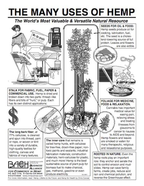 BACH flyer diagram plant