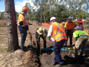 Arborist tree protection and monitoring during rehabilitation works following Cyclone Yasi, Cardwell North Queensland