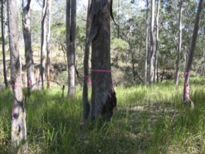 Ecologist tree survey and vegetation assessment for proposed land subdivision and development west of Grafton