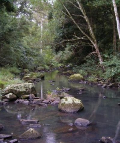 Rainforest vegetation management plan with 27 landholders, Lismore City Council, Tucki Tucki Creek via Lismore