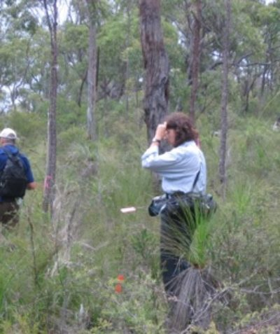 Ecologist survey monitoring and targeted searches for threatened flora and fauna, Shannon Creek Dam via Grafton