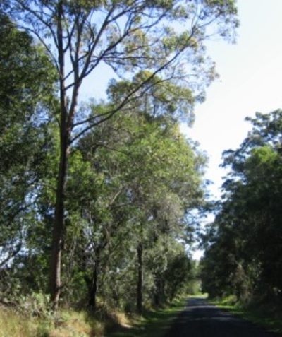 Ecologist vegetation and habitat assessment for land subdivision and installation of power lines, Mearschaum Vale via Ballina