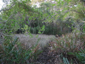 Threatened wetland vegetation ecologist Review of Environmental Factors (REF) for bush fire hazard, Ballina Shire Council