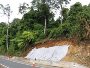 Ecologist impact assessment of landslip repair works in cool upland subtropical rainforest, Dorrigo