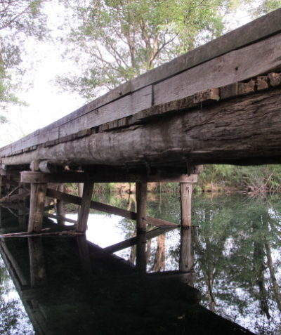 Timber bridge ecologist assessment for threatened microbats, Bellingen