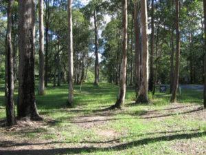 Ecologist environmental impact assessment for power line installation in koala habitat and threatened EEC forest, Illuka