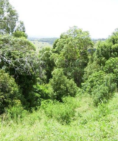Bushfire ecologist vegetation assessment and report for residential development, Goonellabah via Lismore
