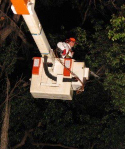 Ecologist monitoring of tree removal in threatened bat habitat, Casino