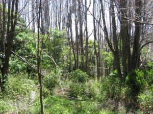 Rainforest property vegetation management plan, Teven via Ballina