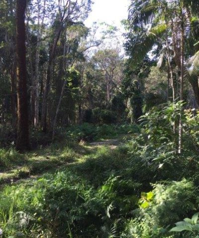 Crown road construction environmental impact assessment, Skinners Shoot via Byron Bay