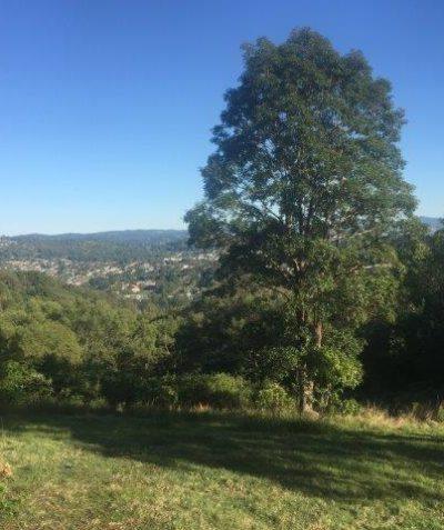 Ecologist koala habitat assessment for subdivision, Goonellabah via Lismore