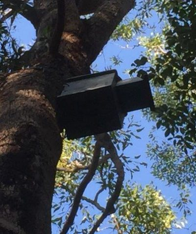 Fauna nest box tree assessment, Broadwater