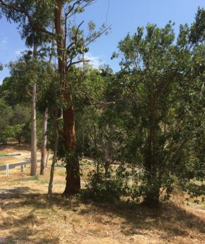 Koala habitat assessment for house development, Suffolk Park via Byron Bay