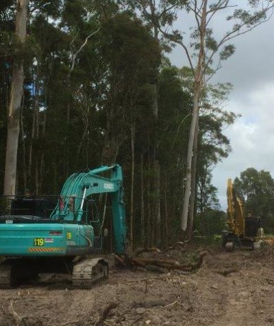 Tree health, condition and risk assessment of retained trees following clearing, Pacific Highway upgrade, Mororo via Yamba