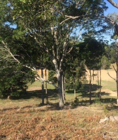 Arborist tree impact assessment report for rural development, Cudgera Creek via Tweed Heads