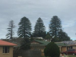Arborist tree significance assessments in Ballina Shire urban areas, significant tree register for Ballina Shire Council
