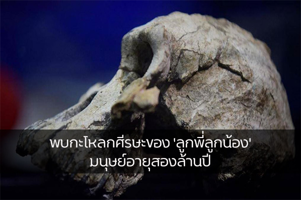 พบกะโหลกศีรษะของ 'ลูกพี่ลูกน้อง' มนุษย์อายุสองล้านปี