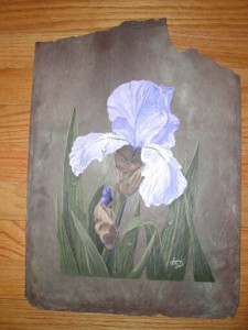 Iris on Slate - Old World