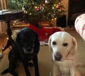 Roux and Rebel Christmas