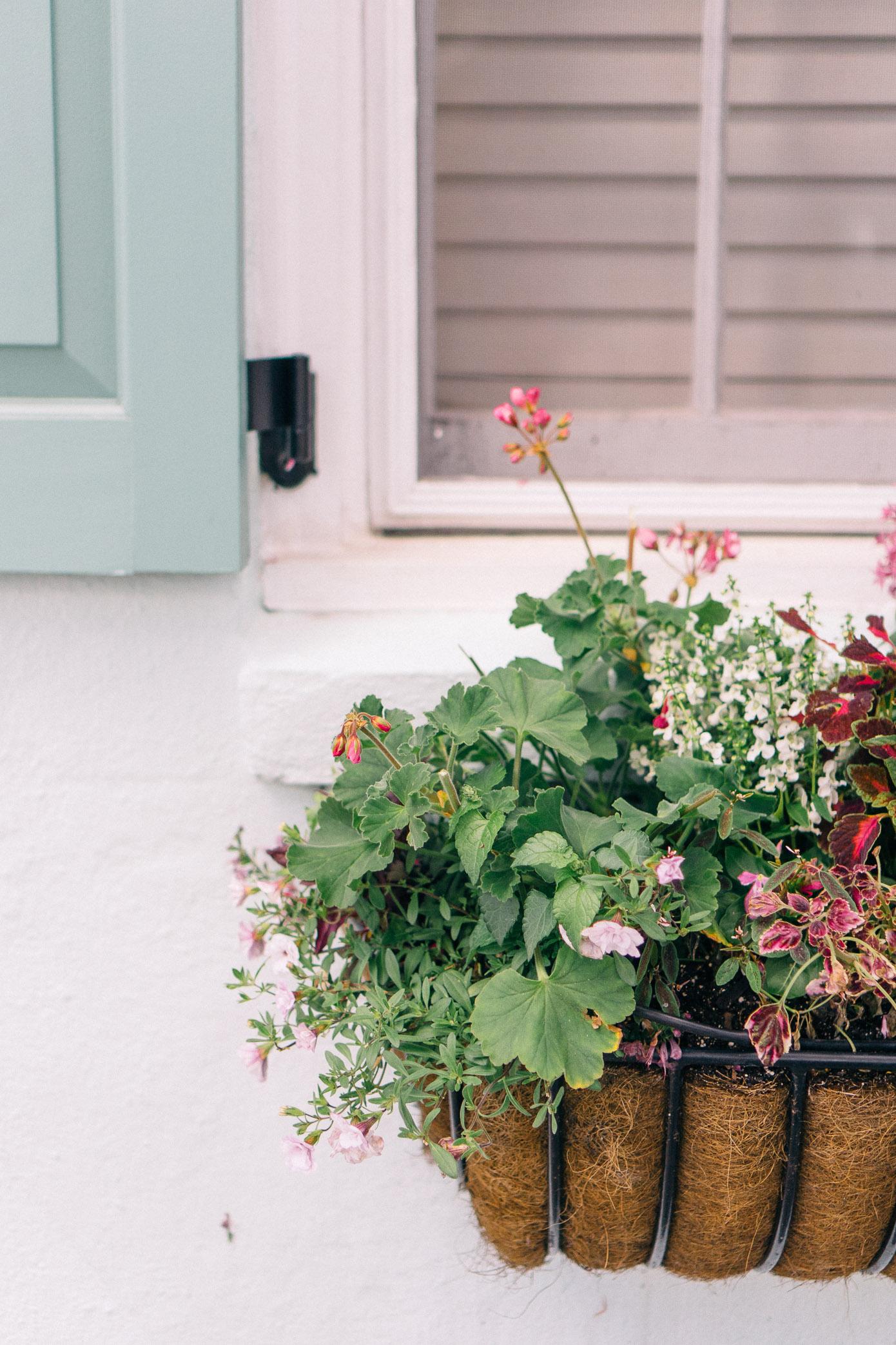 Charleston Window Box | Charleston Homes | Louella Reese Life & Style Blog