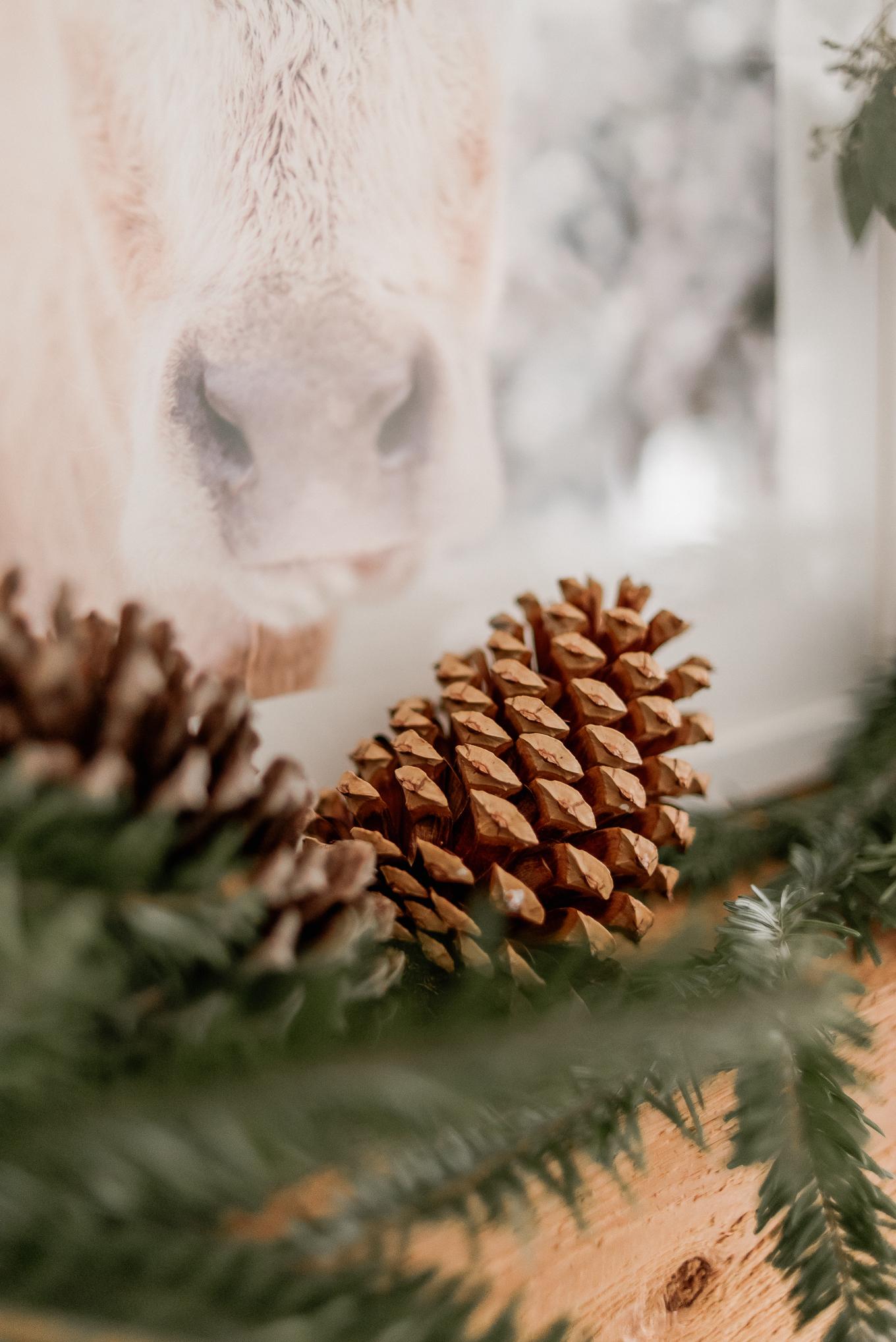 Using Nature for Decor | Christmas Decor | Louella Reese