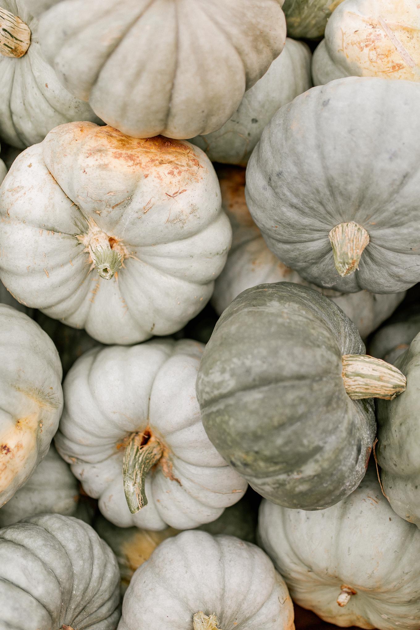 Green Pumpkins for Fall