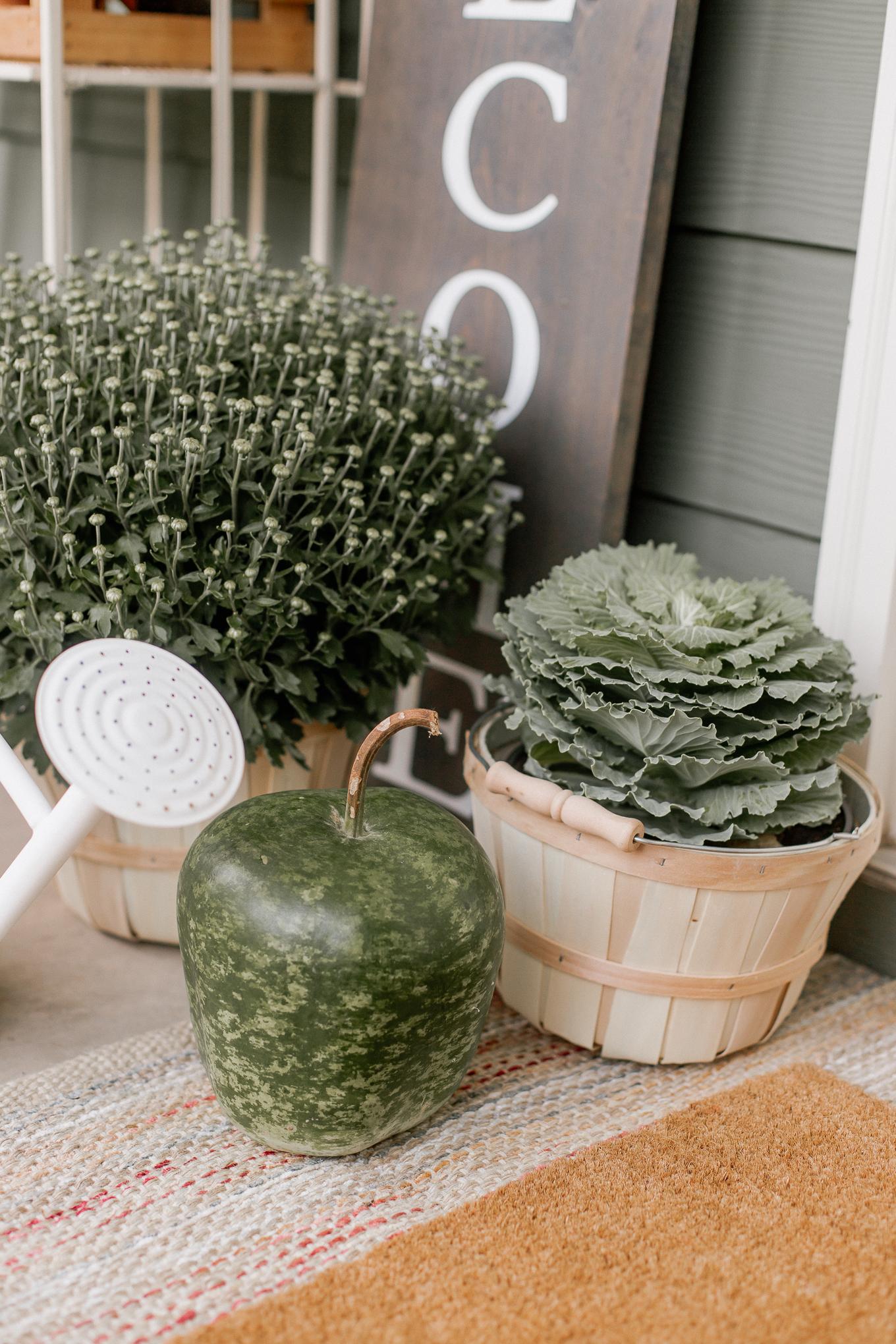 plants for decor
