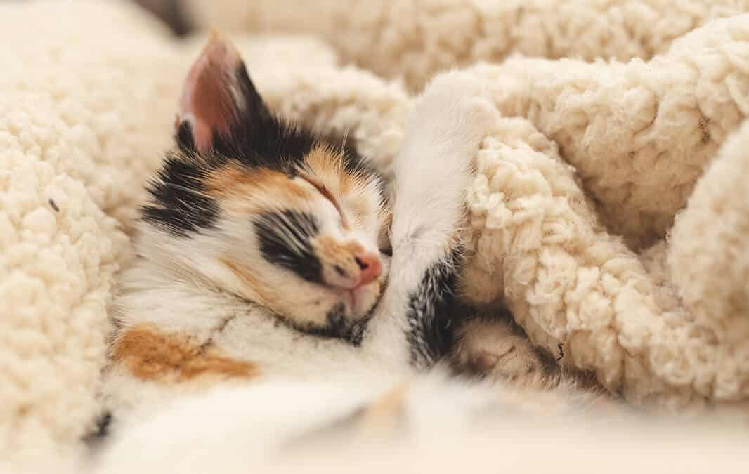 Sleping kitten on the cozy bed