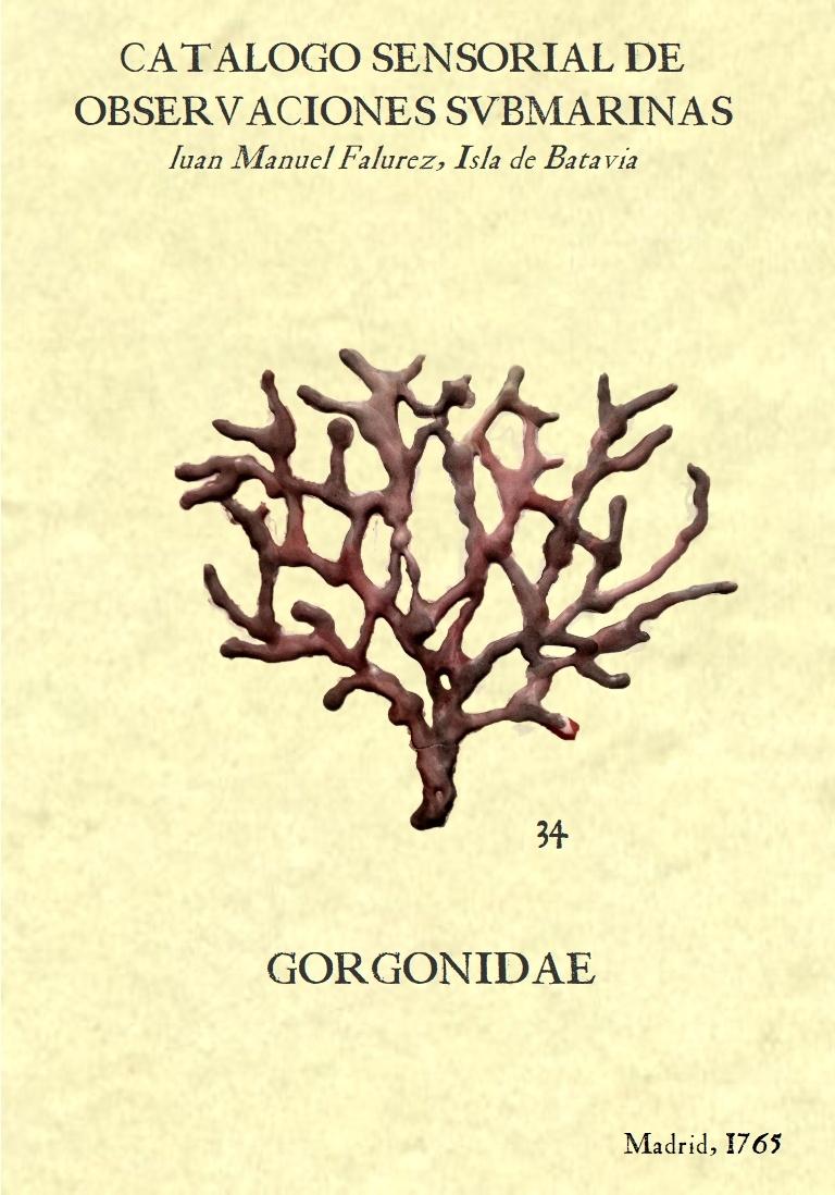 gorgonia nº 34