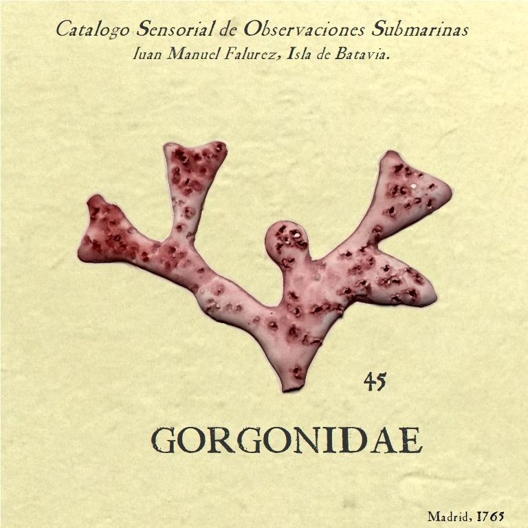 gorgonia rosa 45