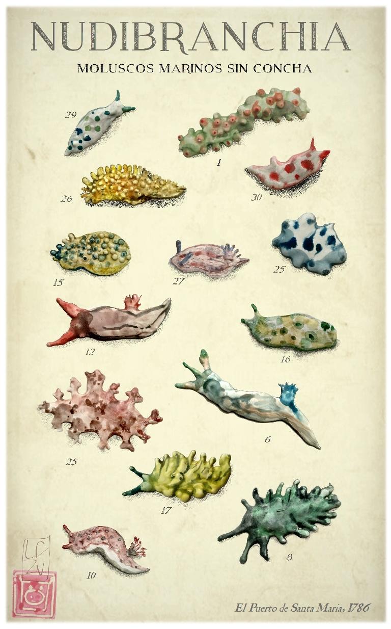 Nudibranches moluscos marinos