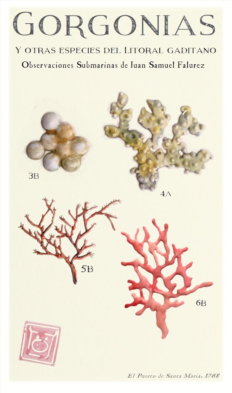 Gorgonias litoral gaditano