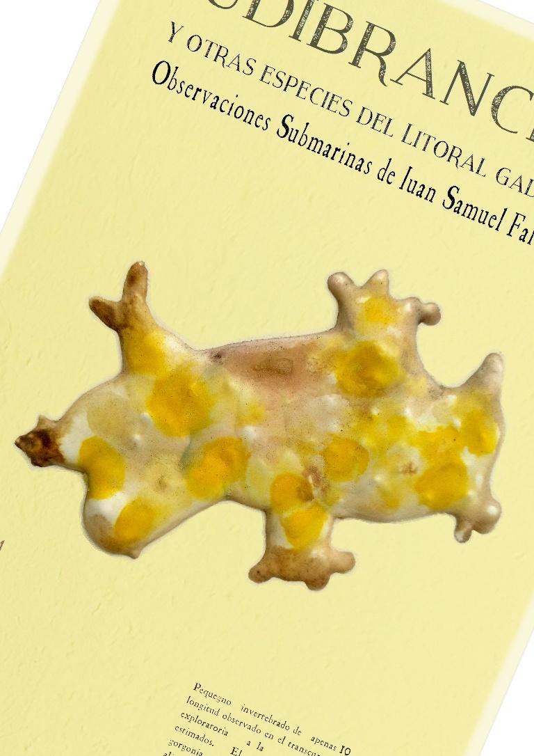 nudibranquia