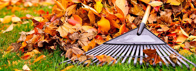 Top Seven Ways to Treat your Lawn in Fall