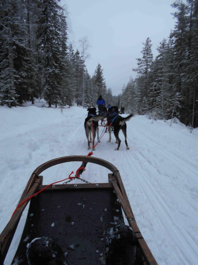 Dog sled ride near Arctic Circle