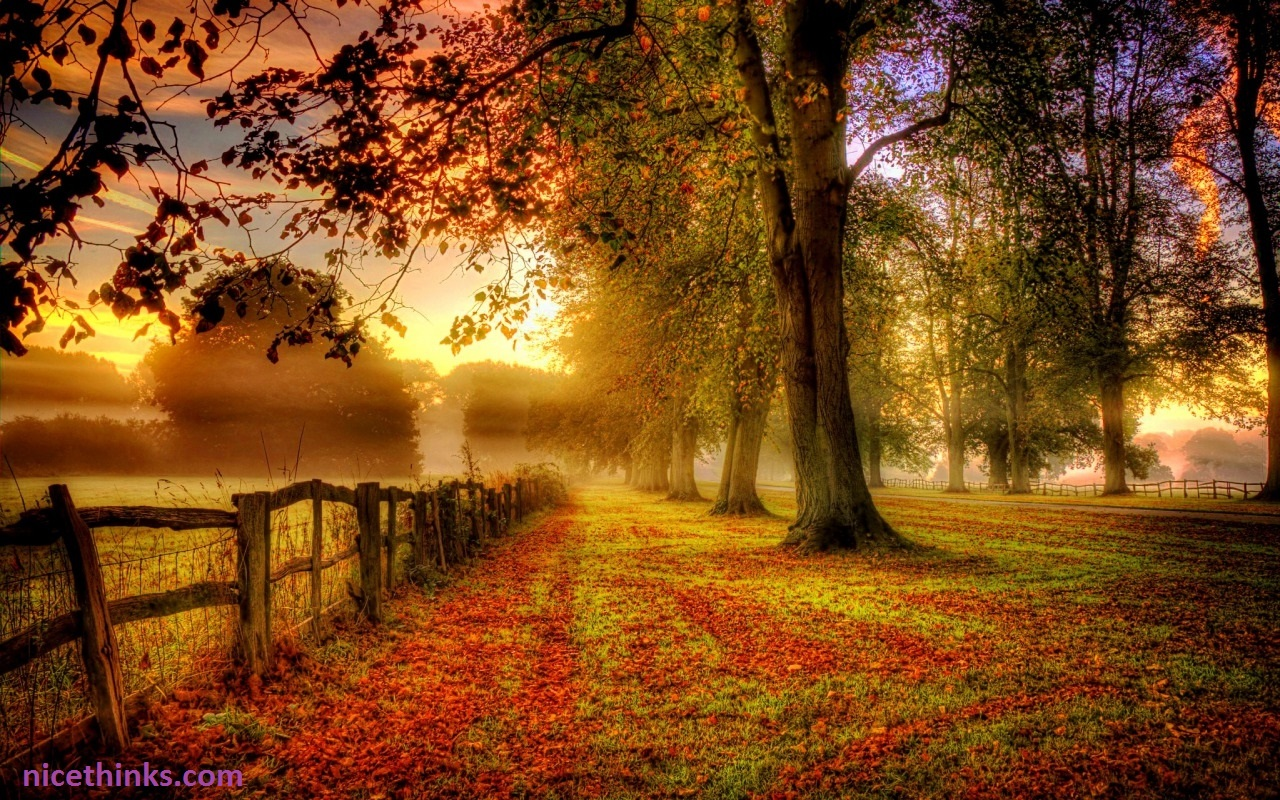 Morning time in autumn