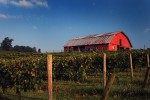 Three Sisters Vineyards & Winery - Dahlonega