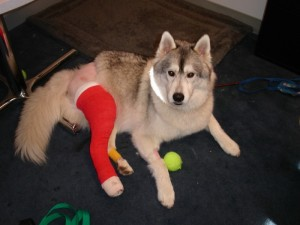 Storm with his cast