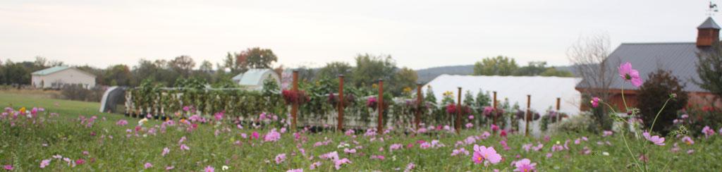 loudounberry-farm-wildflowers