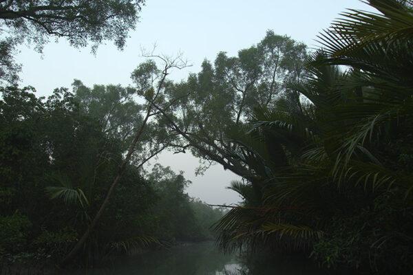 TIGERTIGER_Sundarbans.000017