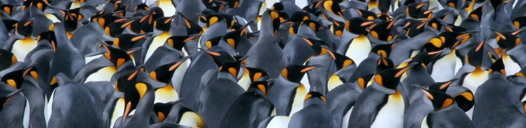 How Big Memory is Being Deployed by Server Vendors: Penguin Computing