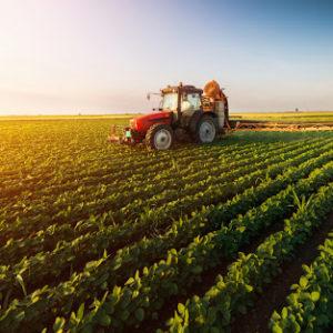 வேளாண்மை / Agriculture