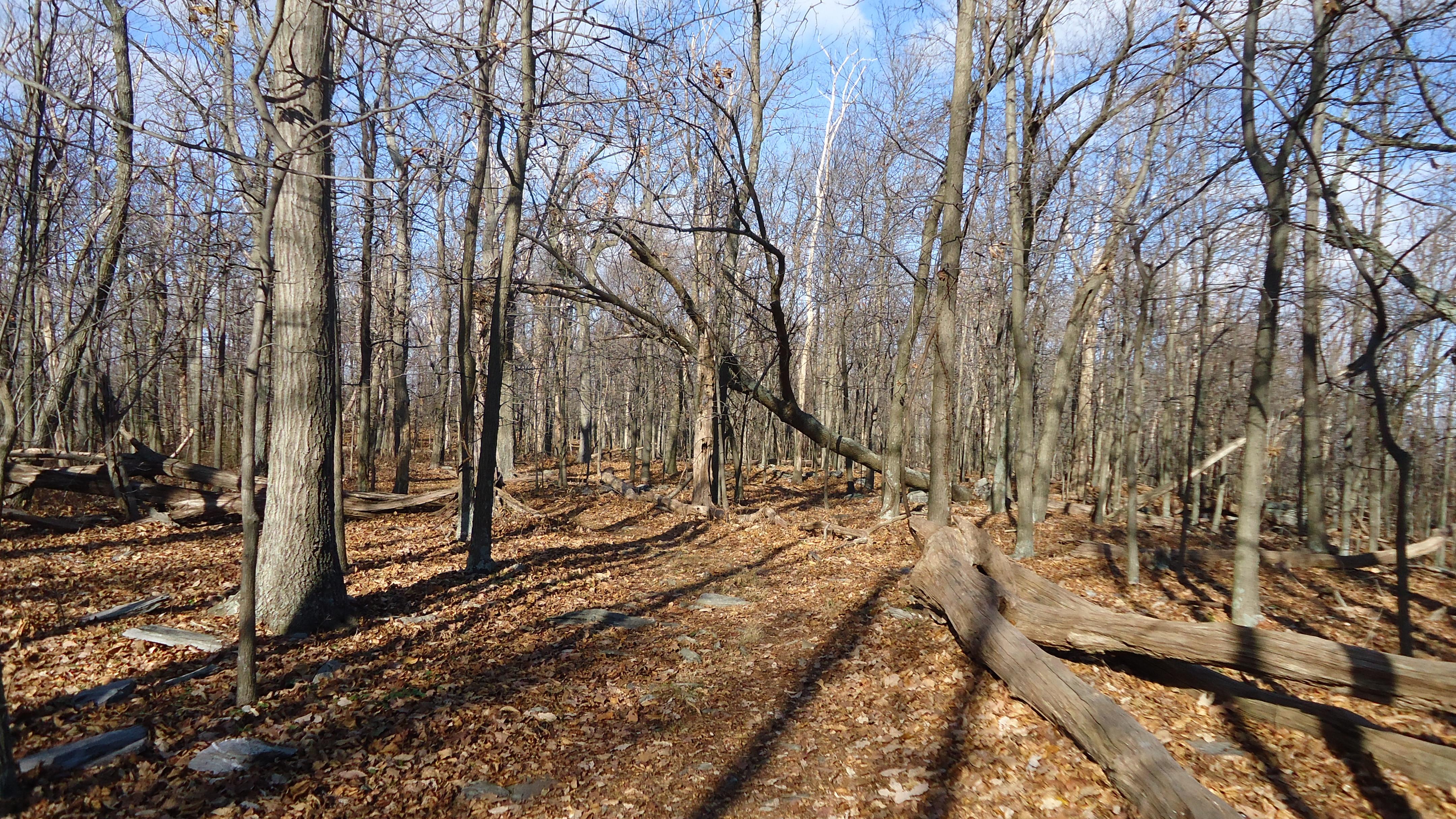 No Deer - Just Woods