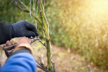 Pruning Services