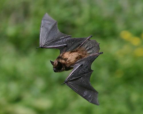 Species Of Wildlife In Humboldt County