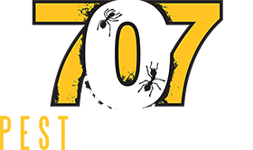 707 Pest Solutions