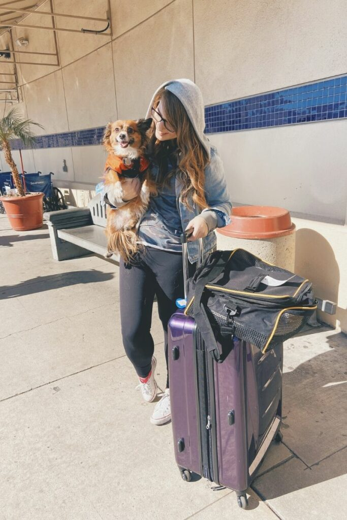 How to Travel With Your Dog by Scout and Bex