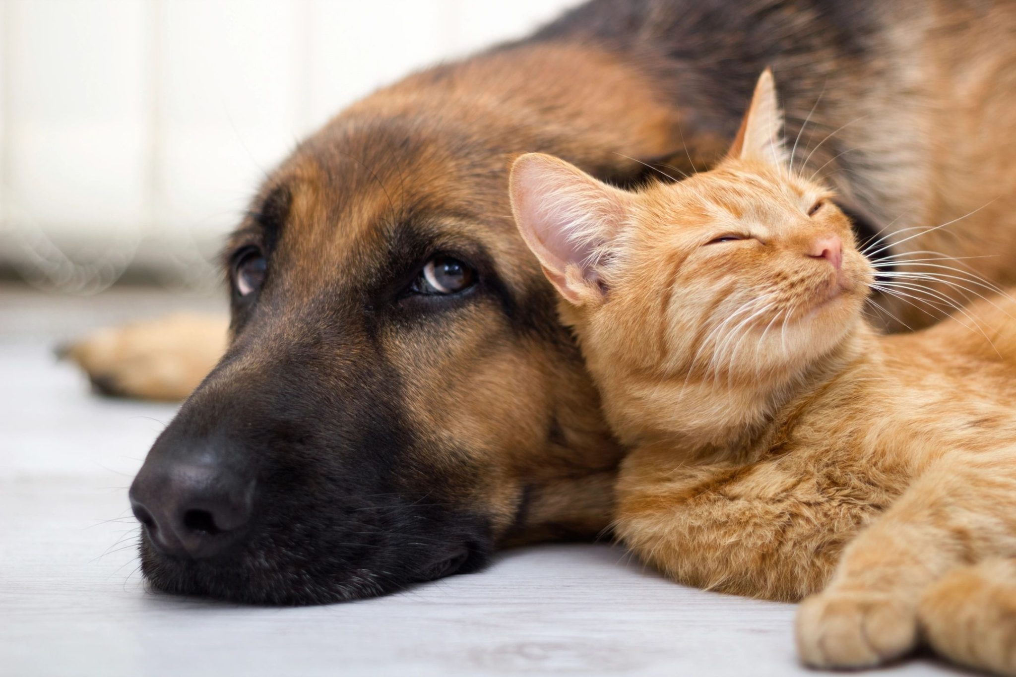 Dog and cat together flea free